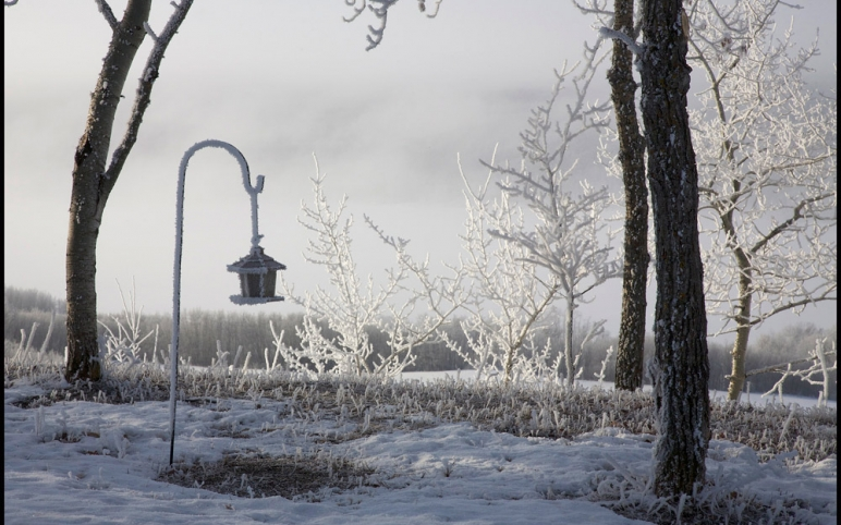 winter view of lot 7